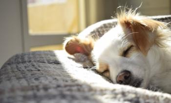 Mơ mất chó nên đánh con gì? Và điềm báo của giấc mơ này ra sao?
